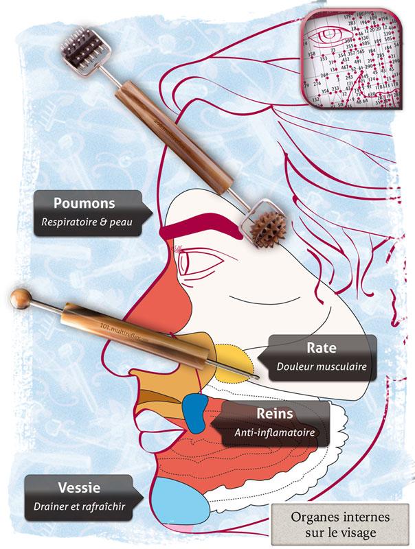carte des organes sur le visage